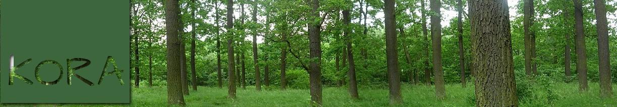 Ogrodowa Piaskownica Huśtawka Elewacja Drewniana Stół Kawowy [R